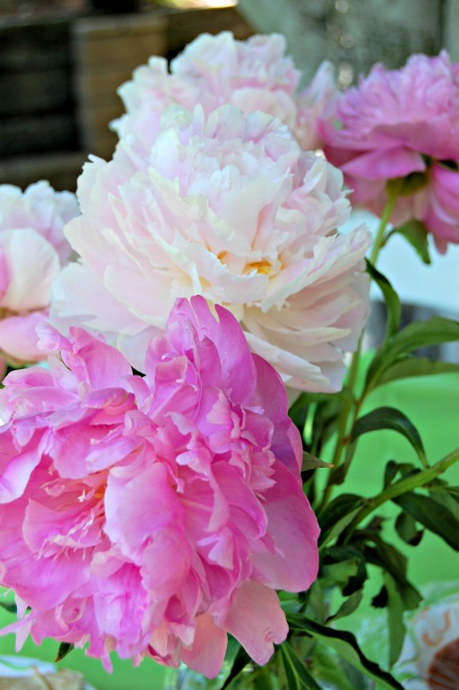 retirement peonies: Cozycakes Cottage