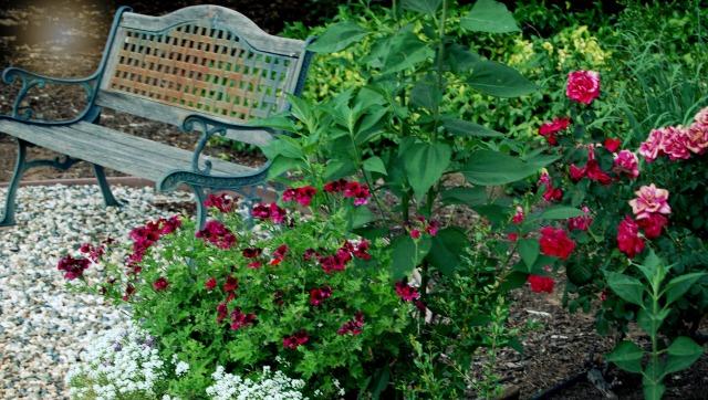 DSC_0887 garden bench mama pm