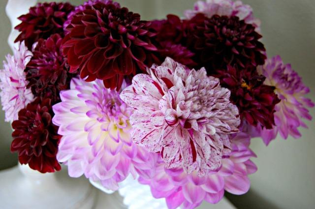 purple dahlia bouquet